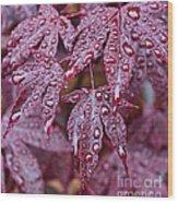 Japanese Acer Palmatum Atropurpurea Shrub Wood Print