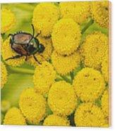 Japanese Beetle She Ruv You Ya Ya Ya Wood Print