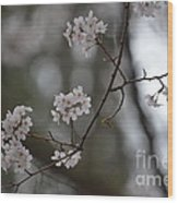 Japanese Cherry Blossoms Wood Print