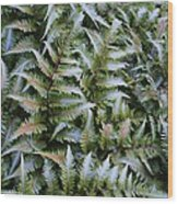 Japanese Ferns Wood Print