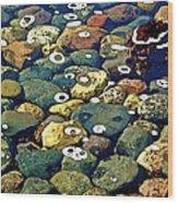 Japanese Garden Pool Rocks Wood Print