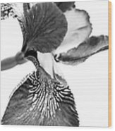 Japanese Iris Flower Monochrome Wood Print