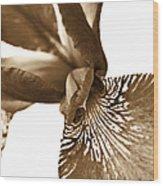 Japanese Iris Flower Sepia Brown 2 Wood Print