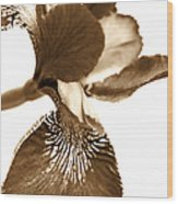 Japanese Iris Flower Sepia Brown Wood Print