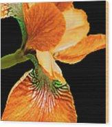 Japanese Iris Orange Black Wood Print