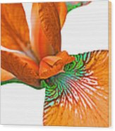 Japanese Iris Orange White Five Wood Print