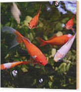 Japanese Koi Fish Wood Print
