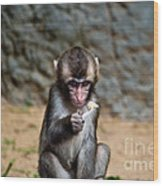 Japanese Macaque Monkey Wood Print
