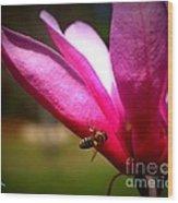 Japanese Magnolia Bloom Wood Print