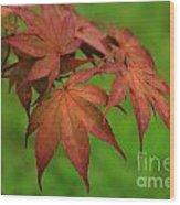 Japanese Maple Autumn Colors Wood Print