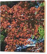 Japanese Maple Canopy Wood Print