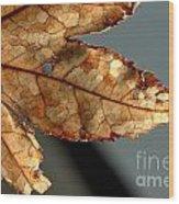 Japanese Maple Leaf Brown - 2 Wood Print