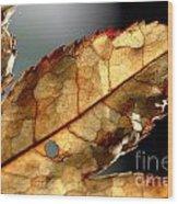 Japanese Maple Leaf Brown - 4 Wood Print