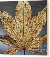 Japanese Maple Leaf Brown - 3 Wood Print