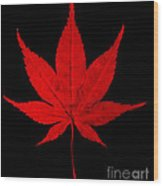 Japanese Maple Leaf Wood Print