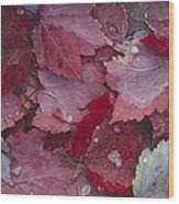 Japanese Maple Leaves With Frost Wood Print