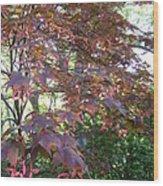 Japanese Maple Spring Wood Print