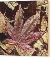 Japanese Maple Tree Leaves Wood Print