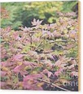 Japanese Maples Wood Print