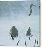 Japanese Or Red-crowned Cranes Wood Print