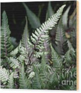 Japanese Painted Fern Wood Print