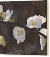 Japanese Quince 2 Wood Print
