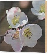 Japanese Quince 4 Wood Print