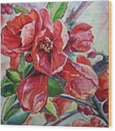 Japanese Quince In Blossom Wood Print