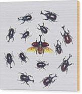Japanese Rhinoceros Beetle Males Wood Print