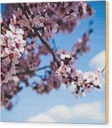 Japanese Sakura Wood Print