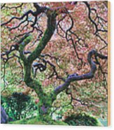 Japanese Tree In Garden Wood Print