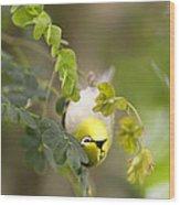 Japanese White Eyes Bird Wood Print