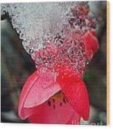 Ice Flower Wood Print