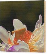 Japenese Jewel Wood Print by Aimelle
