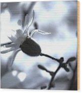 Jasmine Blossom Wood Print