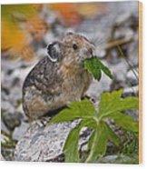 Jasper - Pika Wood Print by Terry Elniski