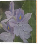 Java Gardens Wood Print