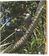 Java Sparrows Wood Print by Colleen Cannon