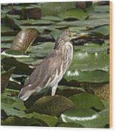 Javan Pond Heron Dthn0071 Wood Print