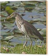 Javan Pond Heron With A Fish Dthn0069 Wood Print