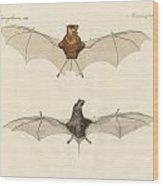 Javanese Bats Wood Print