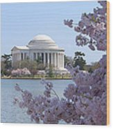 Jefferson Memorial - Cherry Blossoms Wood Print