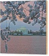 Jefferson Memorial Cherry Blossoms Wood Print
