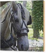 Jekyll Horse Wood Print