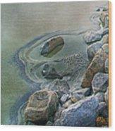 Jekyll Island Tidal Pool Wood Print