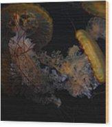 Jelley Fish Wood Print