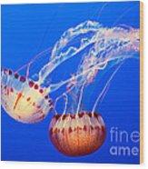 Jelly Dance - Large Jellyfish Atlantic Sea Nettle Chrysaora Quinquecirrha. Wood Print