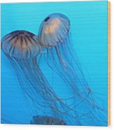 Jelly Fish 5d24945 Wood Print by Wingsdomain Art and Photography