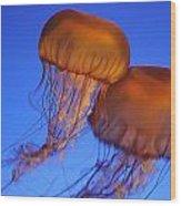 Jelly Fish In Harmony Wood Print