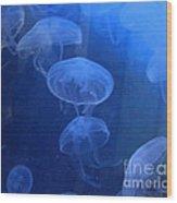Jellyfish   #0547 Wood Print
